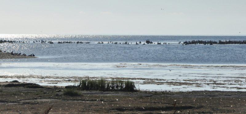 Południowa Olandia to ostoja dla wielu gatunków ptaków, dlatego niewielu tu turystów, a sporo zapalonych ornitologów z wielkimi lornetami i kamerami.
