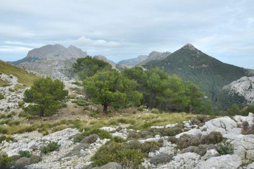 Treki w Serra de Tramuntana